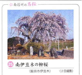 南伊豆木2018.4.7.jpg