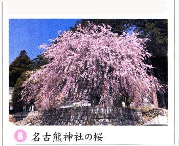 桜情報名古熊神社2018.3.jpg