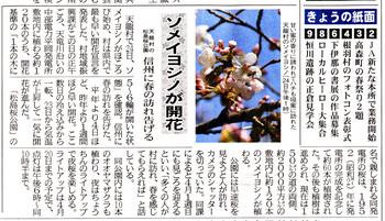桜開花2018,3,26天龍村.jpg