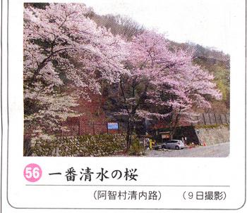 一番清水の桜2018.4.12.jpg