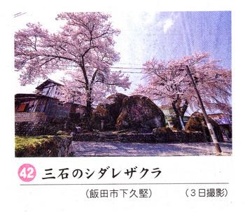 三石シダレ2018.4.7.jpg