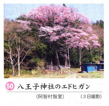 八王子神社2018.4.7.jpg