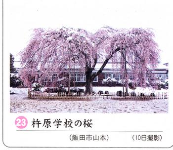 南桜 13.jpg