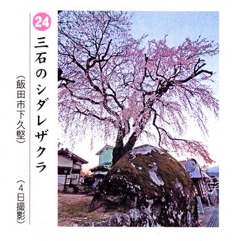 南桜24.jpg