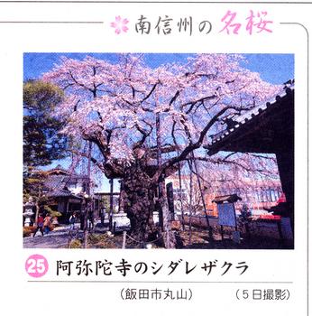 南桜25.jpg