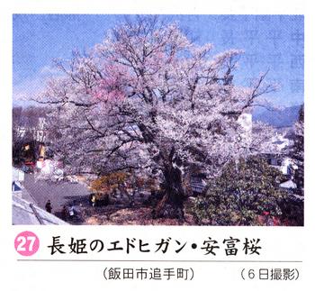 南桜27.jpg