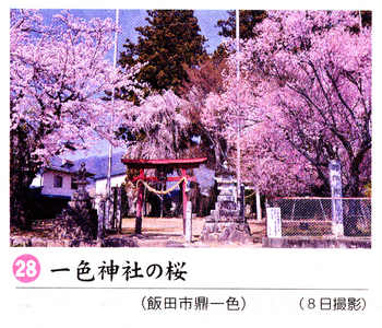南桜28.jpg