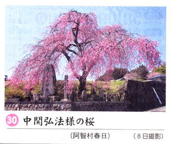 南桜30.jpg