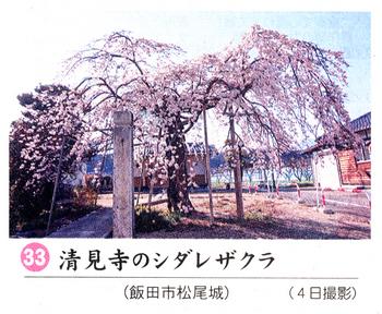 南桜33.jpg