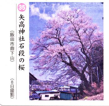 南桜35.jpg