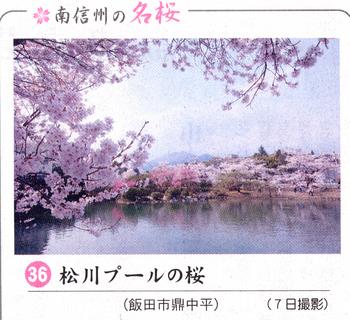 南桜情報36.jpg