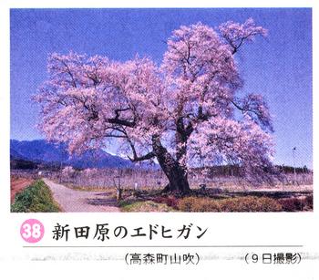 南桜情報38.jpg