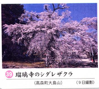 南桜情報39.jpg