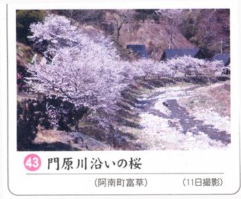 南桜情報43.jpg