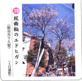 南桜梶曲がり 4.jpg
