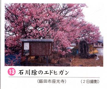 南桜石川 6.jpg