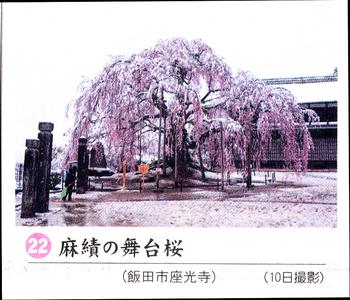 南桜麻績 12.jpg