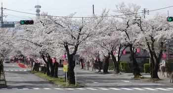 大宮神社桜2.jpg