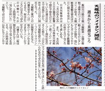 天竜峡開花宣言2018,3,27.jpg