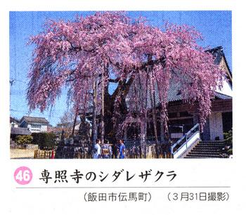 専照寺2018.4.7.jpg