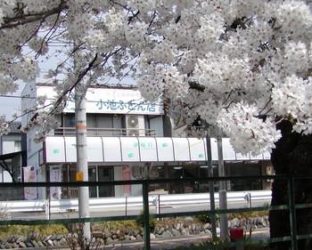 店舗写真桜2.jpg