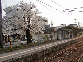 店舗写真桜6.jpg