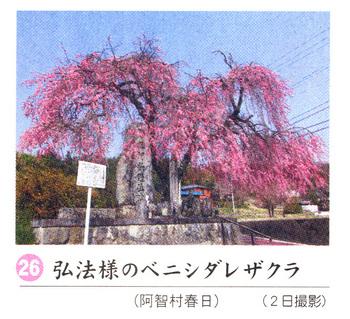 弘法様2018.4.7.jpg