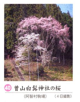曽山神社2018.4.7.jpg