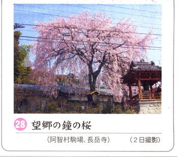 望郷の桜2018.4.7.jpg