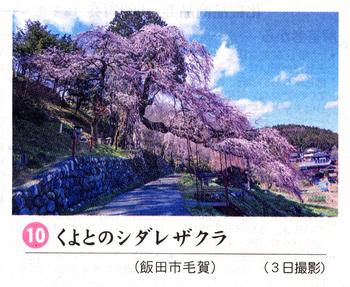 桜情報10.png