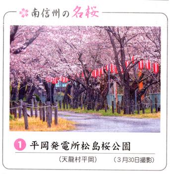 桜情報 1.png