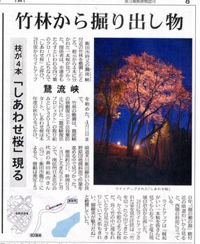 桜情報2018.3.30幸せ桜.jpg