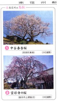 桜情報2018.3.30雲さいじ.jpg