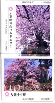 桜情報2018.3.31加賀澤橋.jpg
