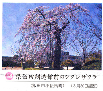 桜情報2018.4.3創造館前.jpg