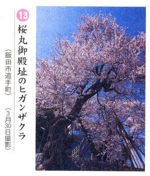 桜情報2018.4.3夫婦桜.jpg