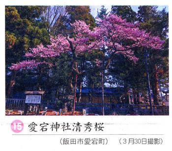桜情報2018.4.3愛宕神社.jpg