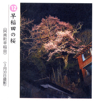 桜情報2018.4.3早稲田.jpg
