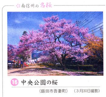 桜情報2018.4.4中央公園.jpg