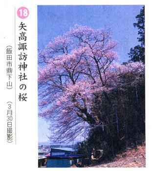 桜情報2018.4.4矢高神社.jpg
