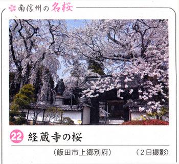 桜情報2018.4.5経蔵寺.jpg