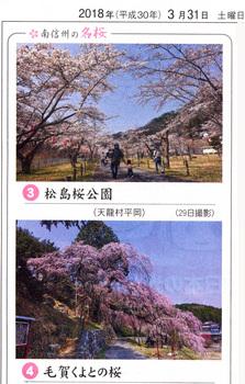 桜情報2018,3.31くよと.jpg