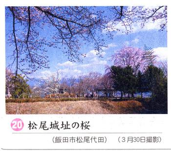 桜情報2018・4.4松尾城址.jpg