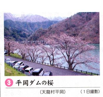 桜情報 3.png