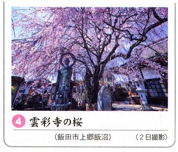 桜情報 4.png