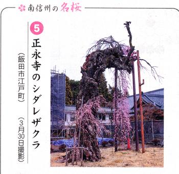 桜情報5.png