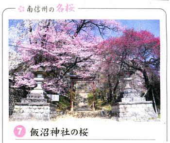 桜情報飯沼神社2018・3.jpg
