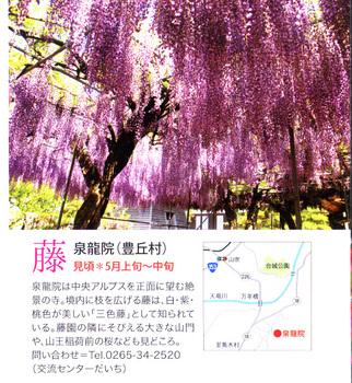 泉龍院藤2018.4.12.jpg
