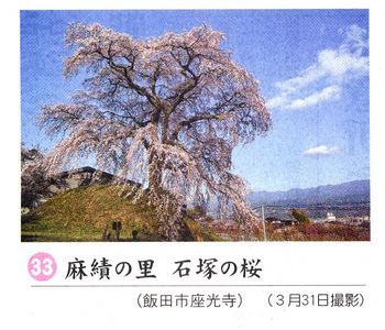石塚桜2018.4.7.jpg