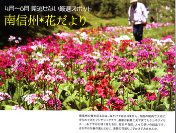 花便り2018.4.12.jpg